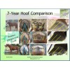 Holistic Barefoot Hoofcare - Consultation