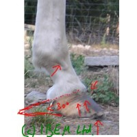 Hoof Analysis